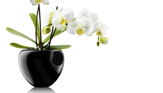 Eva Solo Orchideentopf